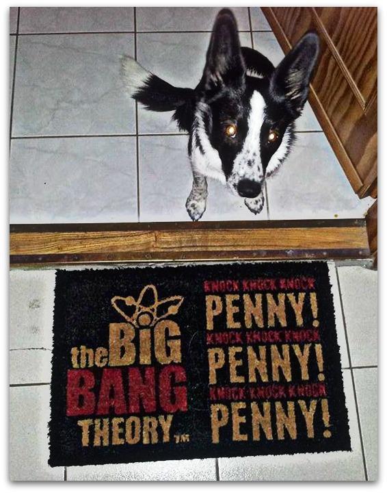 penny, labtorlo, agymenok